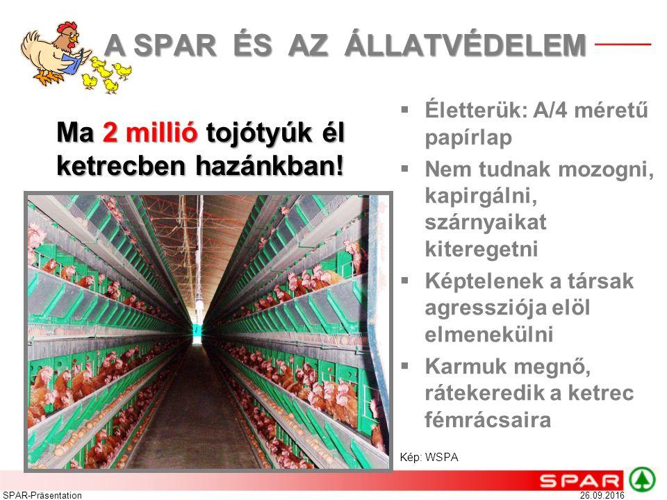 26.09.2016SPAR-Präsentation Ma 2 millió tojótyúk él ketrecben hazánkban!  Életterük: A/4 méretű papírlap  Nem tudnak mozogni, kapirgálni, szárnyaika