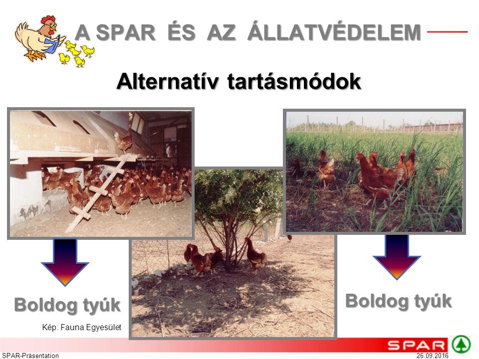 26.09.2016SPAR-Präsentation Alternatív tartásmódok Boldog tyúk Kép: Fauna Egyesület A SPAR ÉS AZ ÁLLATVÉDELEM A SPAR ÉS AZ ÁLLATVÉDELEM Boldog tyúk