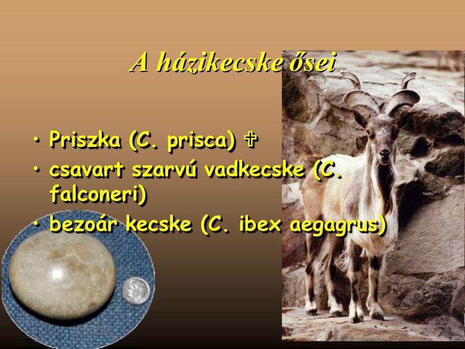 A házikecske ősei Priszka (C. prisca) Priszka (C.