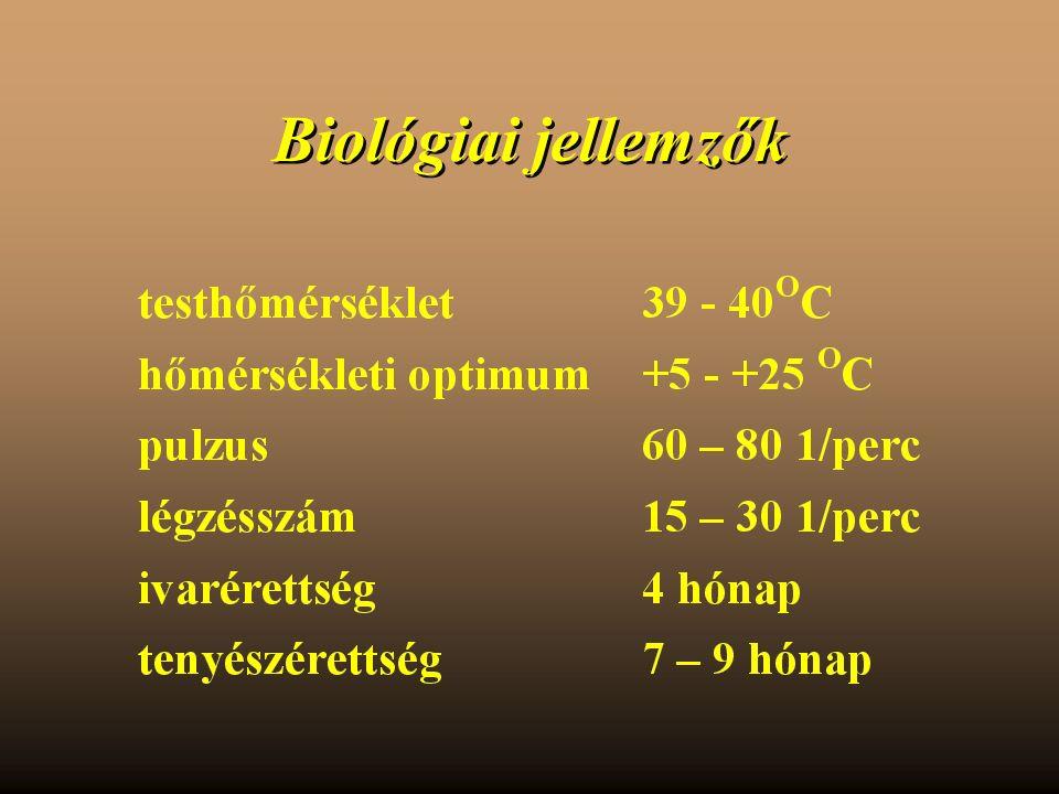Biológiai jellemzők