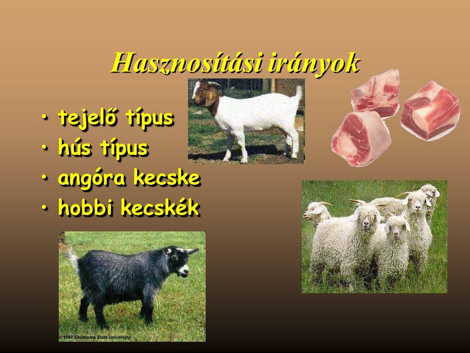 Hasznosítási irányok tejelő típustejelő típus hús típushús típus angóra kecskeangóra kecske hobbi kecskékhobbi kecskék tejelő típustejelő típus hús típushús típus angóra kecskeangóra kecske hobbi kecskékhobbi kecskék