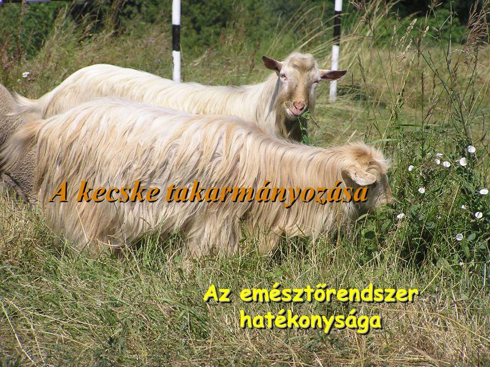 A kecske takarmányozása Az emésztőrendszer hatékonysága