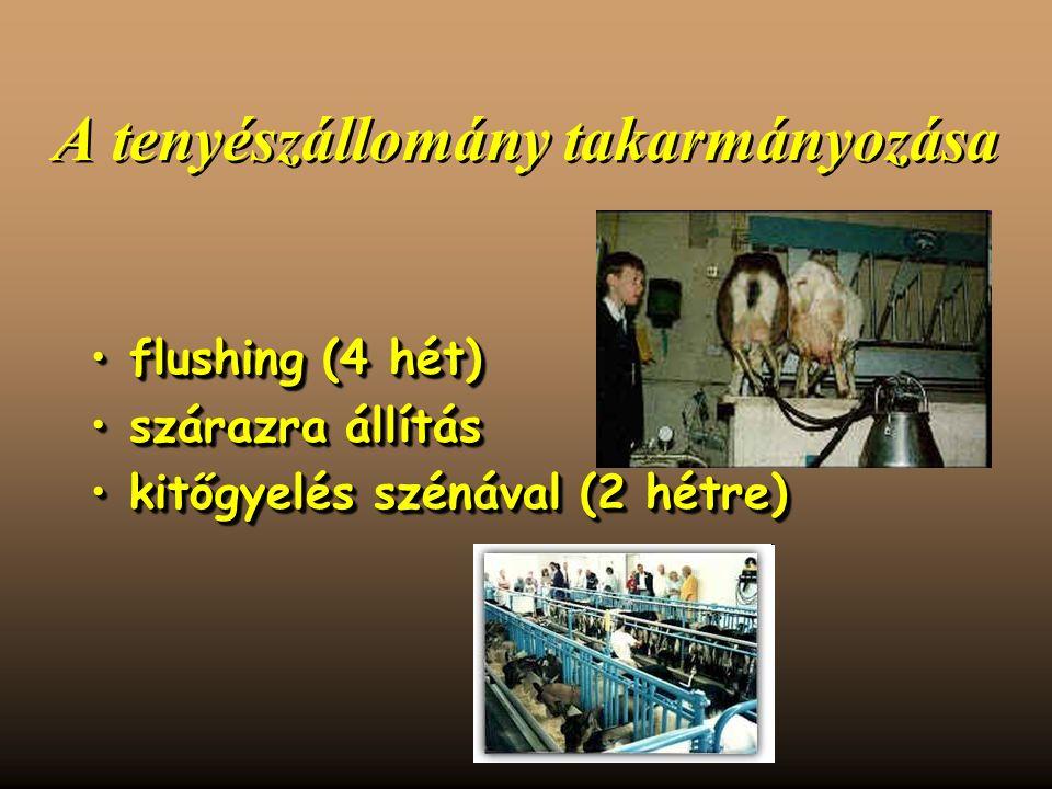 A tenyészállomány takarmányozása flushing (4 hét)flushing (4 hét) szárazra állításszárazra állítás kitőgyelés szénával (2 hétre)kitőgyelés szénával (2 hétre) flushing (4 hét)flushing (4 hét) szárazra állításszárazra állítás kitőgyelés szénával (2 hétre)kitőgyelés szénával (2 hétre)