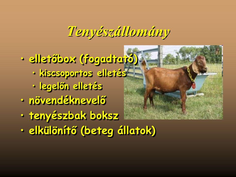Tenyészállomány elletőbox (fogadtató)elletőbox (fogadtató) kiscsoportos elletéskiscsoportos elletés legelőn elletéslegelőn elletés növendéknevelőnövendéknevelő tenyészbak boksztenyészbak boksz elkülönítő (beteg állatok)elkülönítő (beteg állatok) elletőbox (fogadtató)elletőbox (fogadtató) kiscsoportos elletéskiscsoportos elletés legelőn elletéslegelőn elletés növendéknevelőnövendéknevelő tenyészbak boksztenyészbak boksz elkülönítő (beteg állatok)elkülönítő (beteg állatok)