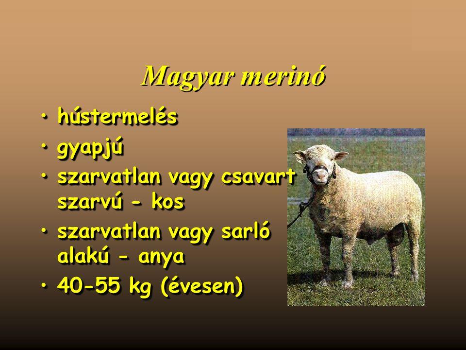 Magyar merinó hústermeléshústermelés gyapjúgyapjú szarvatlan vagy csavart szarvú - kosszarvatlan vagy csavart szarvú - kos szarvatlan vagy sarló alakú - anyaszarvatlan vagy sarló alakú - anya 40-55 kg (évesen)40-55 kg (évesen) hústermeléshústermelés gyapjúgyapjú szarvatlan vagy csavart szarvú - kosszarvatlan vagy csavart szarvú - kos szarvatlan vagy sarló alakú - anyaszarvatlan vagy sarló alakú - anya 40-55 kg (évesen)40-55 kg (évesen)