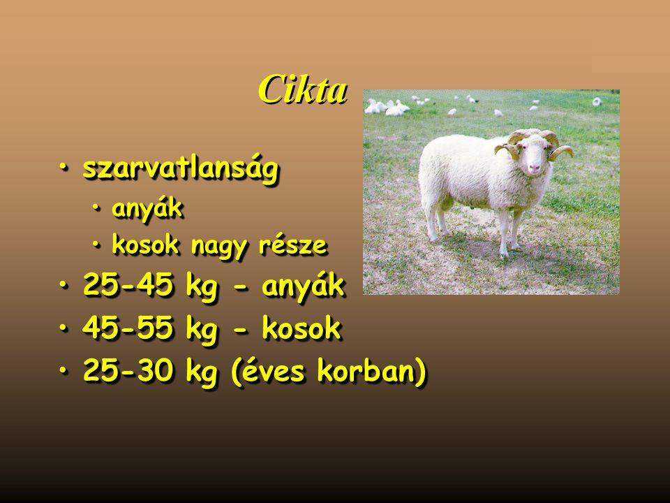 Cikta szarvatlanságszarvatlanság anyákanyák kosok nagy részekosok nagy része 25-45 kg - anyák25-45 kg - anyák 45-55 kg - kosok45-55 kg - kosok 25-30 kg (éves korban)25-30 kg (éves korban) szarvatlanságszarvatlanság anyákanyák kosok nagy részekosok nagy része 25-45 kg - anyák25-45 kg - anyák 45-55 kg - kosok45-55 kg - kosok 25-30 kg (éves korban)25-30 kg (éves korban)
