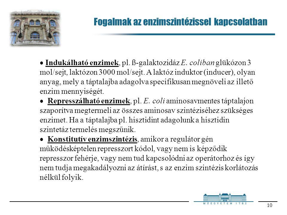 10  Indukálható enzimek, pl. ß-galaktozidáz E.