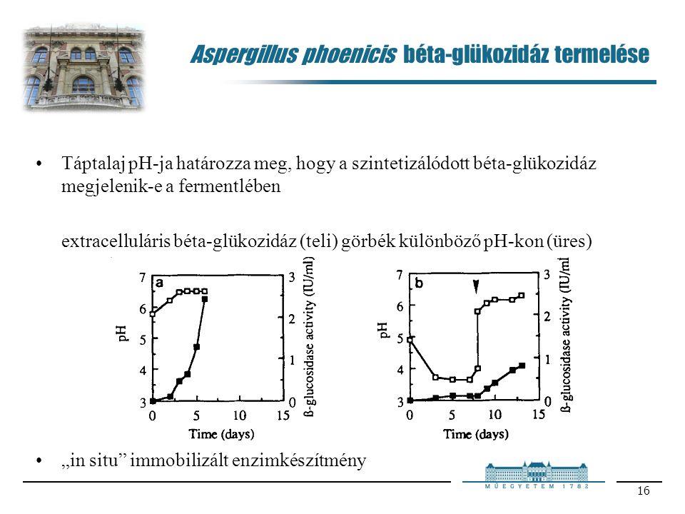 """16 Aspergillus phoenicis béta-glükozidáz termelése Táptalaj pH-ja határozza meg, hogy a szintetizálódott béta-glükozidáz megjelenik-e a fermentlében extracelluláris béta-glükozidáz (teli) görbék különböző pH-kon (üres) """"in situ immobilizált enzimkészítmény"""