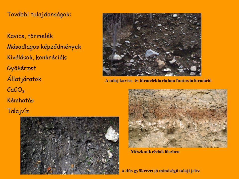 További tulajdonságok: Kavics, törmelék Másodlagos képződmények Kiválások, konkréciók: Gyökérzet Állatjáratok CaCO 3 Kémhatás Talajvíz A talaj kavics- és törmeléktartalma fontos információ Mészkonkréciók löszben A dús gyökérzet jó minőségű talajt jelez