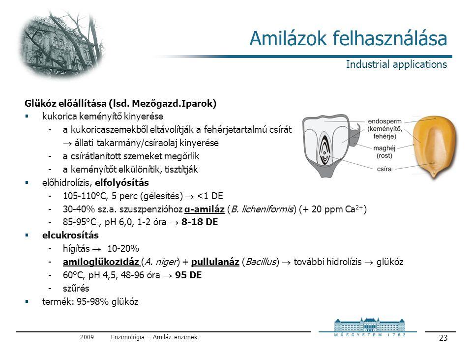 2009Enzimológia – Amiláz enzimek 23 Amilázok felhasználása Glükóz előállítása (lsd.