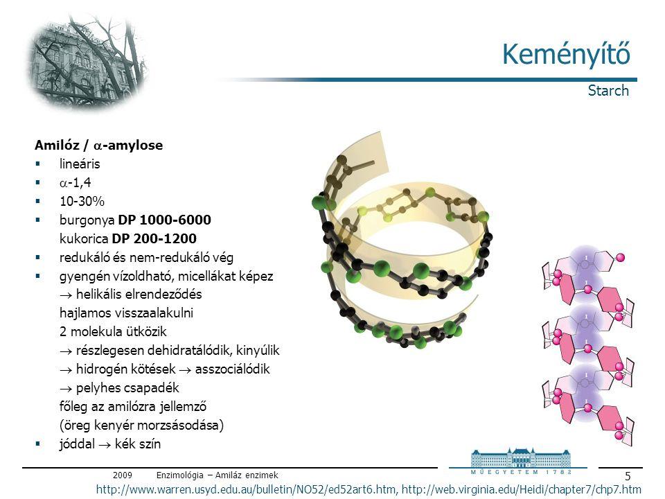 2009Enzimológia – Amiláz enzimek 5 Keményítő Amilóz /  -amylose  lineáris   -1,4  10-30%  burgonya DP 1000-6000 kukorica DP 200-1200  redukáló és nem-redukáló vég  gyengén vízoldható, micellákat képez  helikális elrendeződés hajlamos visszaalakulni 2 molekula ütközik  részlegesen dehidratálódik, kinyúlik  hidrogén kötések  asszociálódik  pelyhes csapadék főleg az amilózra jellemző (öreg kenyér morzsásodása)  jóddal  kék szín Starch http://www.warren.usyd.edu.au/bulletin/NO52/ed52art6.htm, http://web.virginia.edu/Heidi/chapter7/chp7.htm