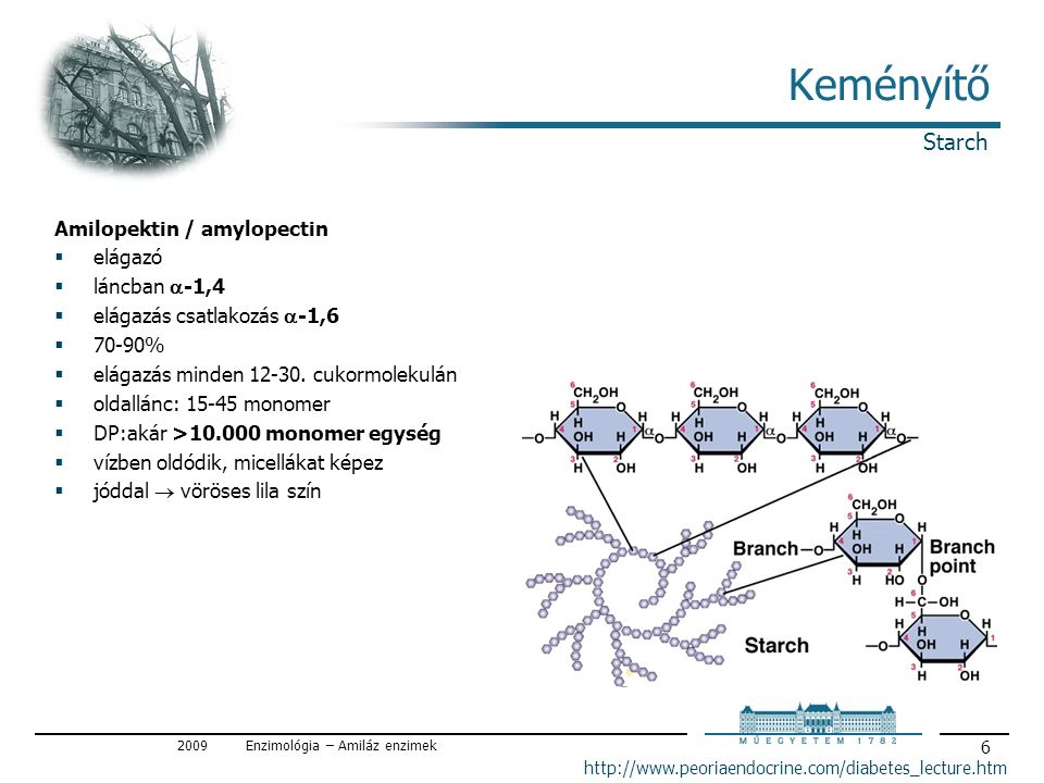 2009Enzimológia – Amiláz enzimek 6 Keményítő Amilopektin / amylopectin  elágazó  láncban  -1,4  elágazás csatlakozás  -1,6  70-90%  elágazás minden 12-30.