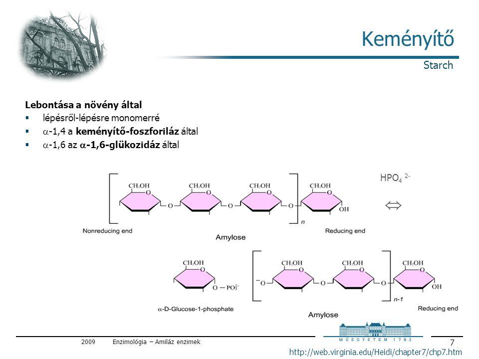 2009Enzimológia – Amiláz enzimek 18 Amilázok Elágazásbontó enzimek / debranching enzymes  elágazásoknál αlfa-1,6 kötéseket és  határdextrint bont  izoamiláz csak αlfa-1,6 kötéseket bont, αlfa-1,4-et nem  Pullulanáz (Aerobacter aerogenez termeli) pullulánt is bontja pullulán: Pullularia pullulans (ma helyesen: Aureobasidium pullulans, élesztőszerű gomba) tartalék tápanyaga, glükóz polimer, maltotrióz láncokból α-1,6 kötéssel épül fel (α-1,4 és α-1,6 kötés) (pullulán ehető, ízetlen; felhasználása: élelmiszeradalék, kapszula- alapanyag) I-es típus: α-1,6 kötéseket vág maltotriózt szabadít fel II-es típus: α-1,4 és 1,6 kötéseket is vág (α-amiláz-pullulanáz) maltózt és maltotriózt szabadít fel neopullulanáz: α-1,4 és α-1,6 kötések bontása után transzglikozilációval új α-1,4 és α-1,6 kötést hoz létre Amylases