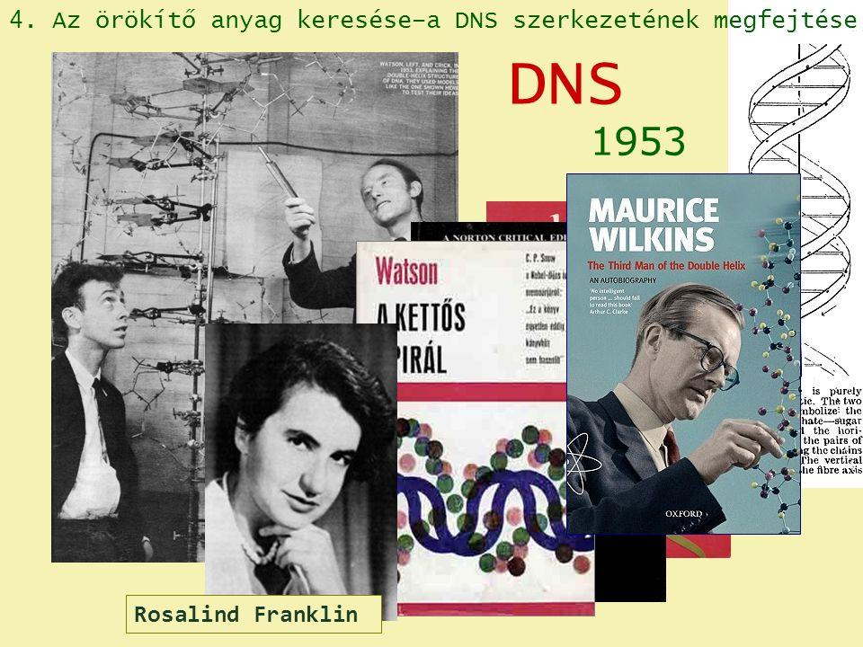 James D. Watson Francis Crick 1953 DNS 4. Az örökítő anyag keresése–a DNS szerkezetének megfejtése Rosalind Franklin