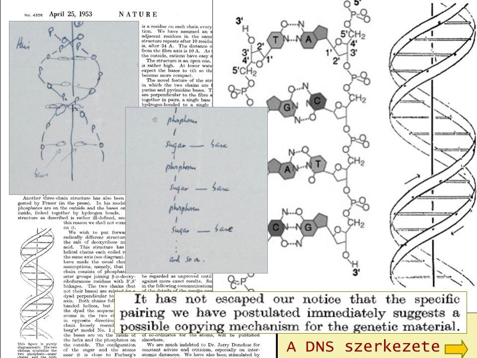 A DNS szerkezete