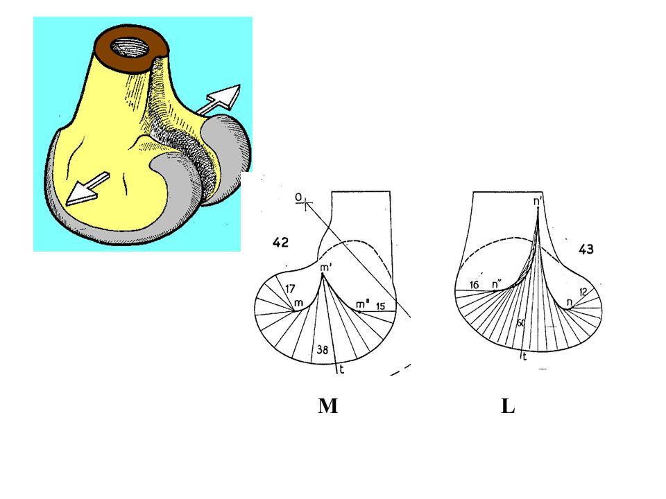 A femur condylusainak alakja ML 40-45 