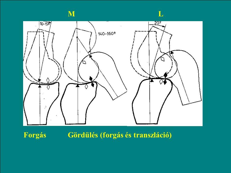 Mozgás az izületben transzverzális síkban gördülésTranszláció (csúszás)