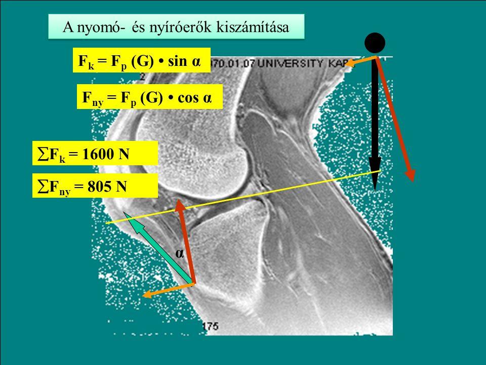 F p k p = G k G F p = G k G / k p Fp = 1200 N ha k G / k p = 2 A patella ínra eső húzóerő kiszámítása