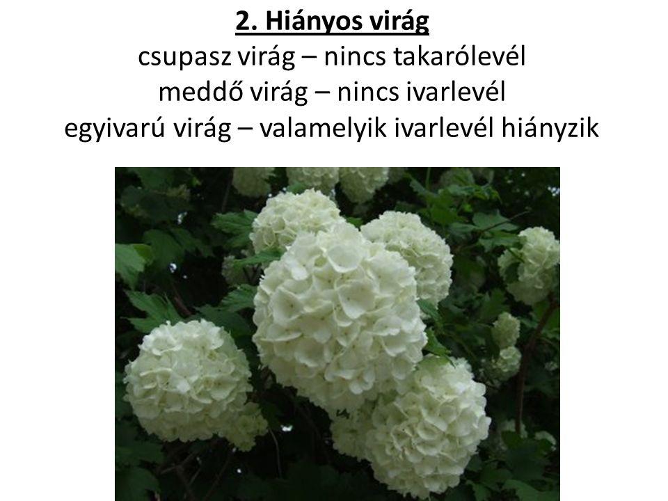 2. Hiányos virág csupasz virág – nincs takarólevél meddő virág – nincs ivarlevél egyivarú virág – valamelyik ivarlevél hiányzik