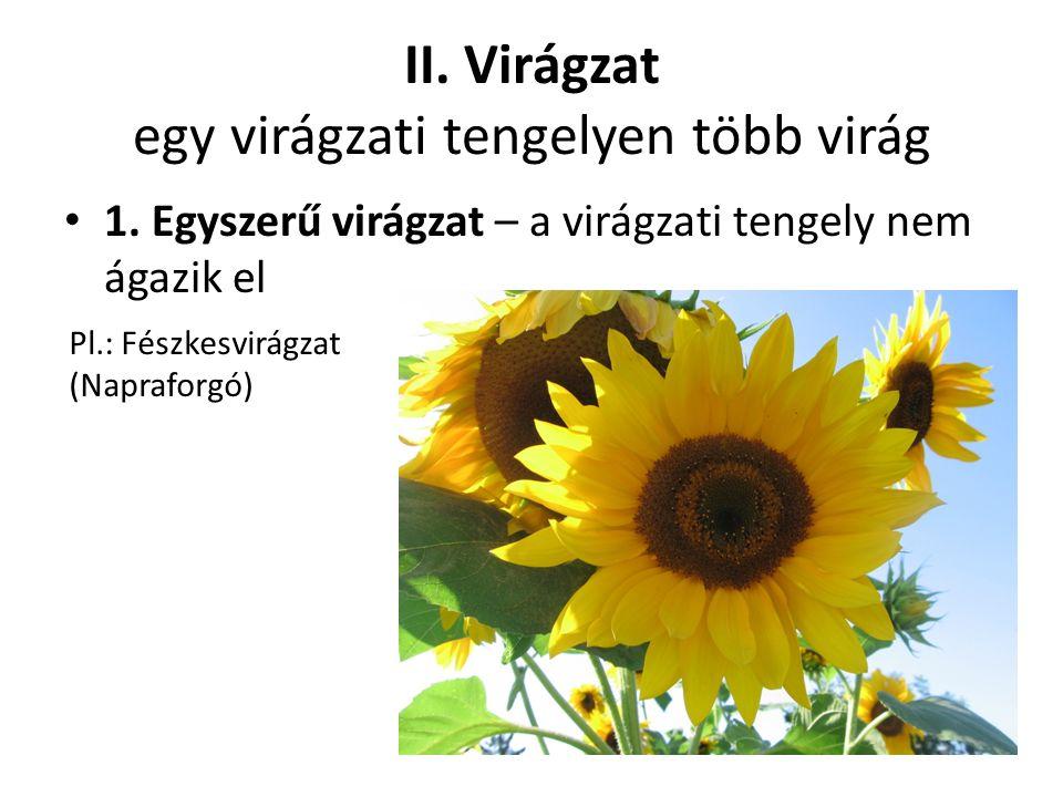 II. Virágzat egy virágzati tengelyen több virág 1.
