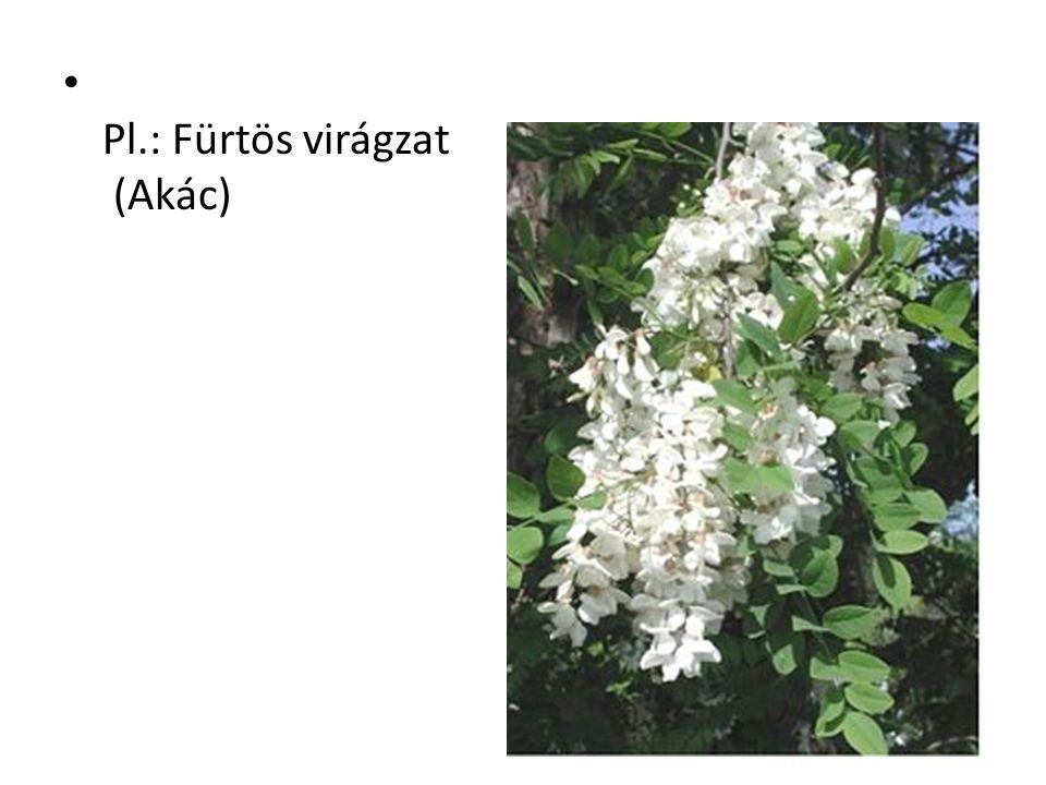 Pl.: Fürtös virágzat (Akác)