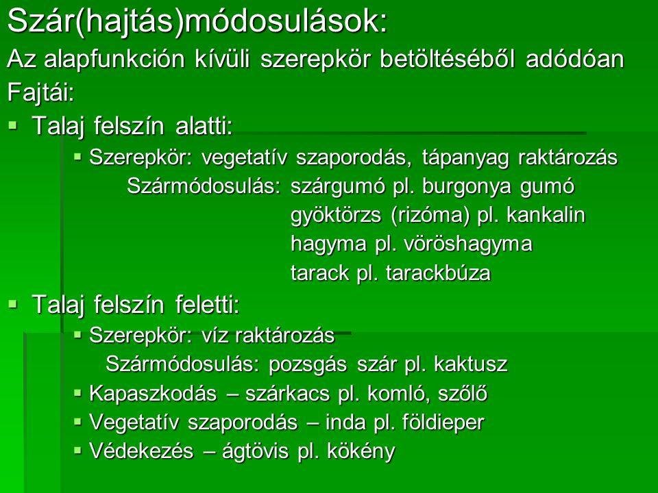 Szár(hajtás)módosulások: Az alapfunkción kívüli szerepkör betöltéséből adódóan Fajtái:  Talaj felszín alatti:  Szerepkör: vegetatív szaporodás, tápanyag raktározás Szármódosulás: szárgumó pl.