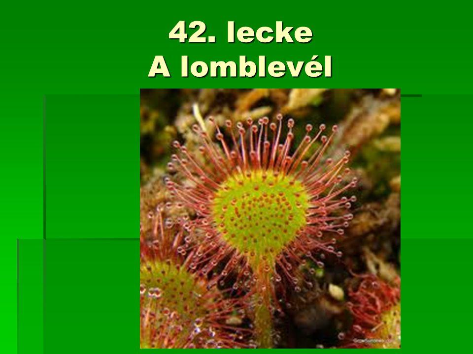 42. lecke A lomblevél