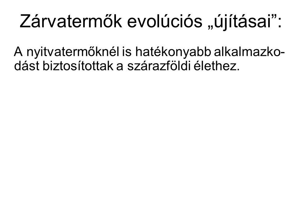 """Zárvatermők evolúciós """"újításai : A nyitvatermőknél is hatékonyabb alkalmazko- dást biztosítottak a szárazföldi élethez."""
