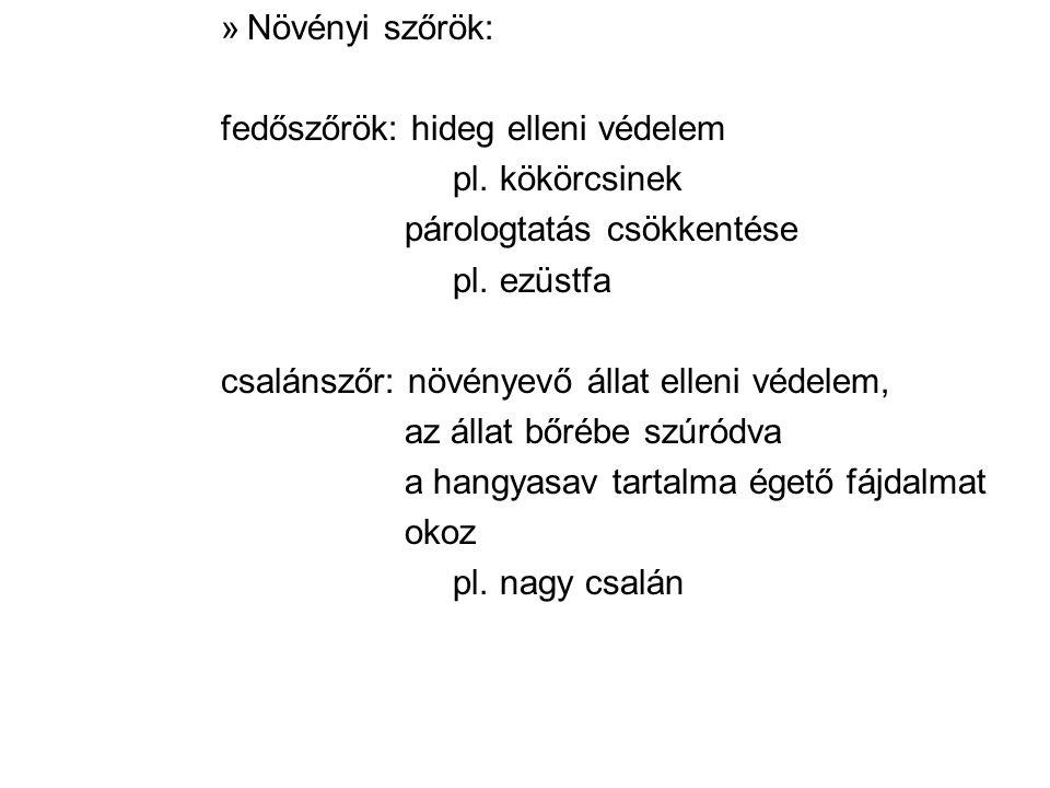 »Növényi szőrök: fedőszőrök: hideg elleni védelem pl.