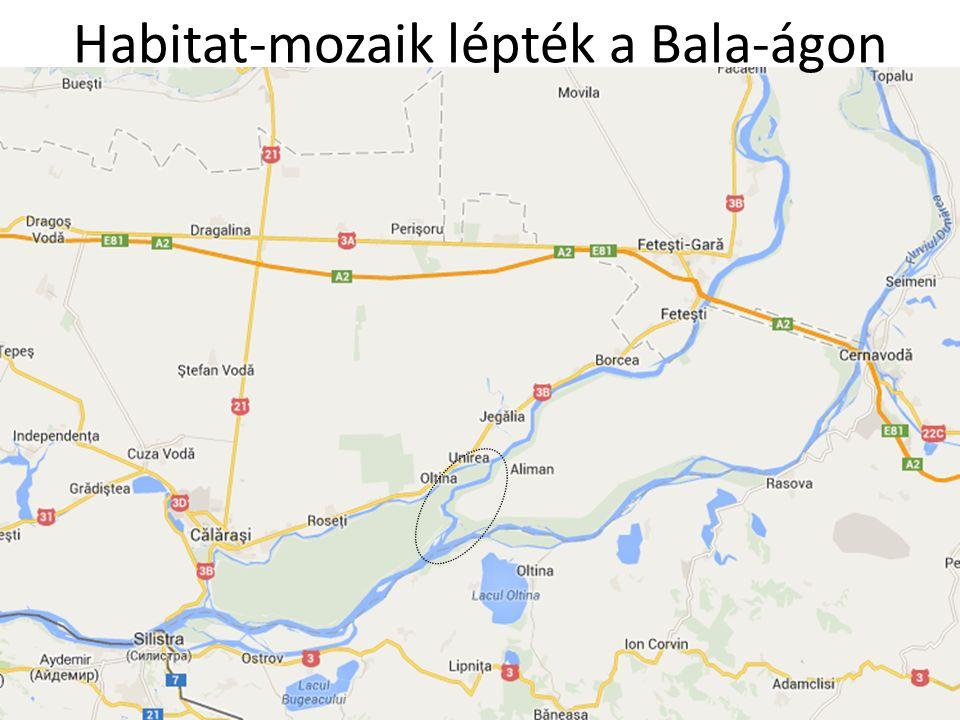 Habitat-mozaik lépték a Bala-ágon