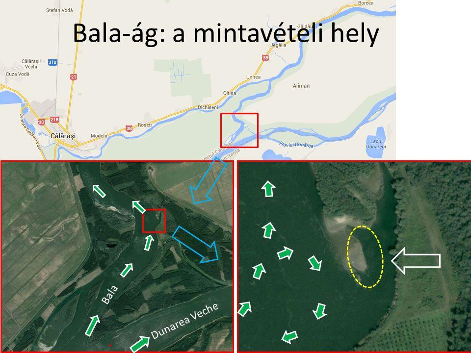 Bala-ág: a mintavételi hely Dunarea Veche Bala