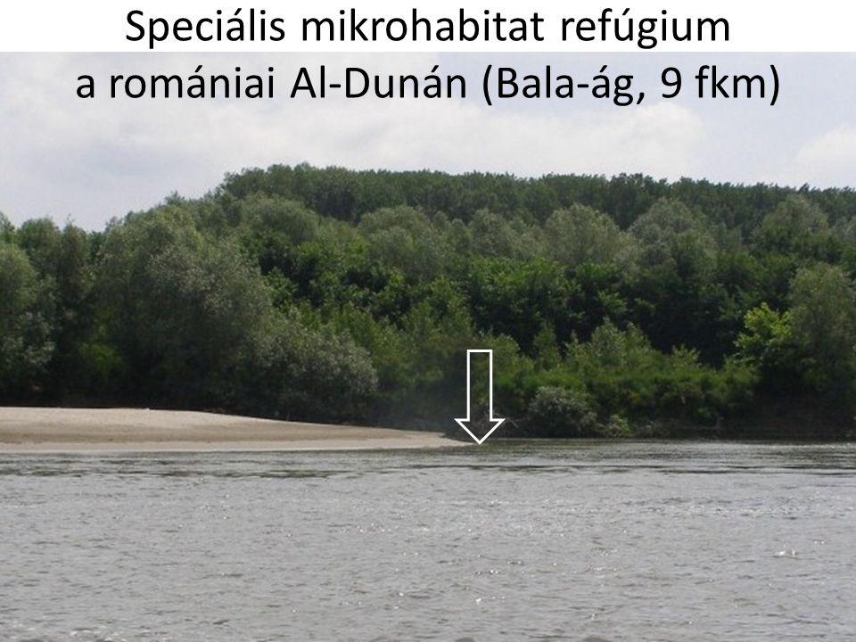 Speciális mikrohabitat refúgium a romániai Al-Dunán (Bala-ág, 9 fkm)