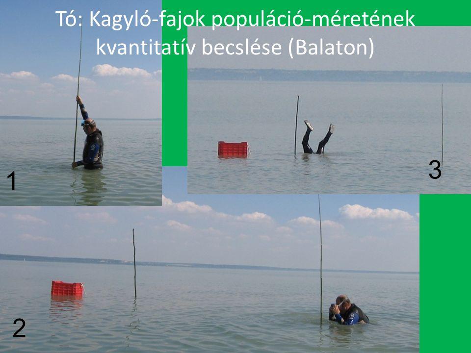Tó: Kagyló-fajok populáció-méretének kvantitatív becslése (Balaton) 1 2 3