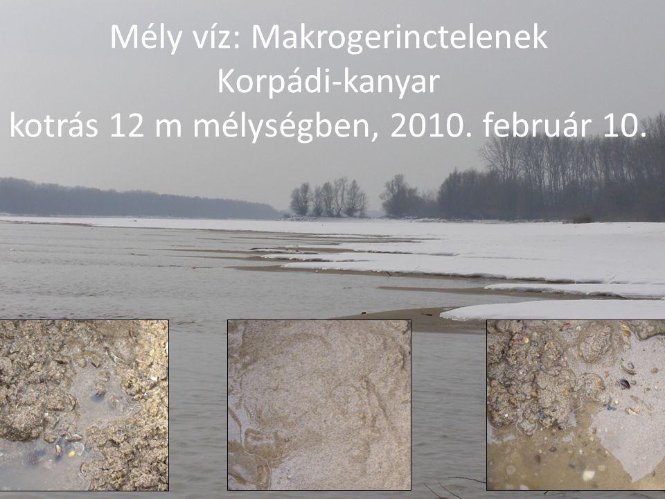 Mély víz: Makrogerinctelenek Korpádi-kanyar kotrás 12 m mélységben, 2010. február 10.