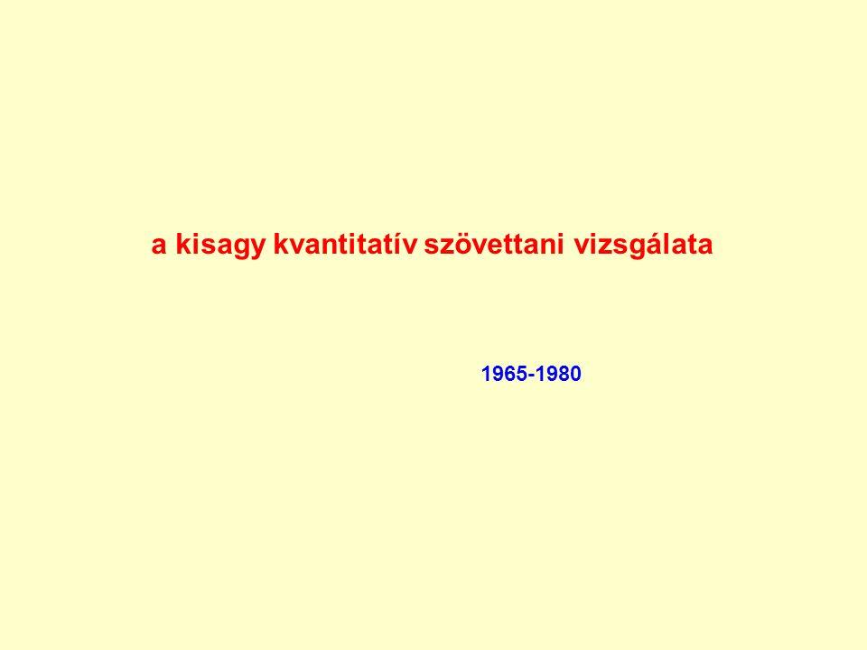 a kisagy kvantitatív szövettani vizsgálata 1965-1980