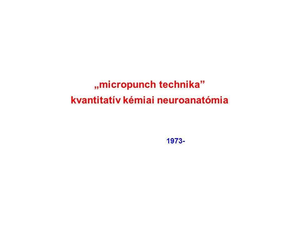 """""""micropunch technika kvantitatív kémiai neuroanatómia 1973-"""