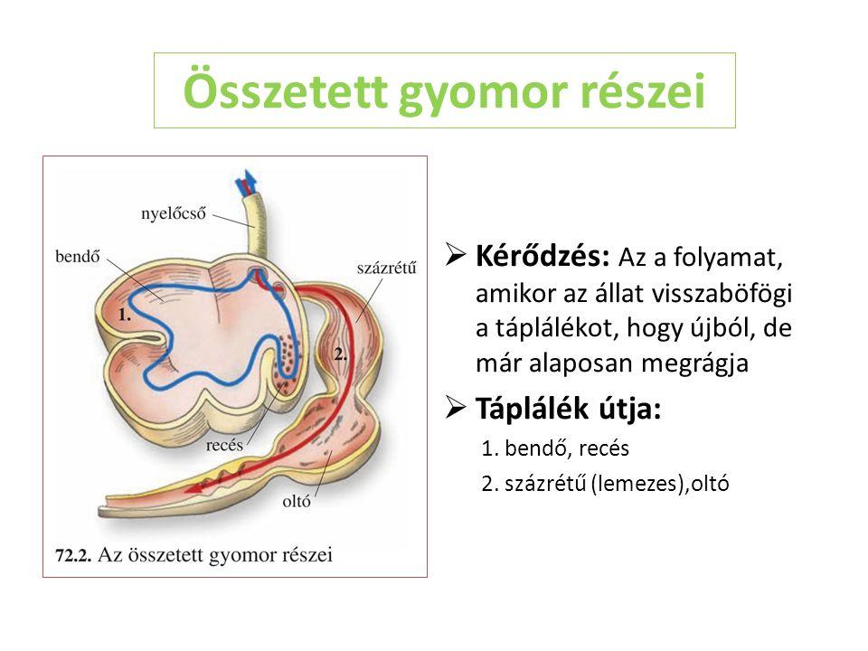 Besorolása  Gerinces, mert testét csontváz szilárdítja, melynek tengelyében a gerincoszlop húzódik.