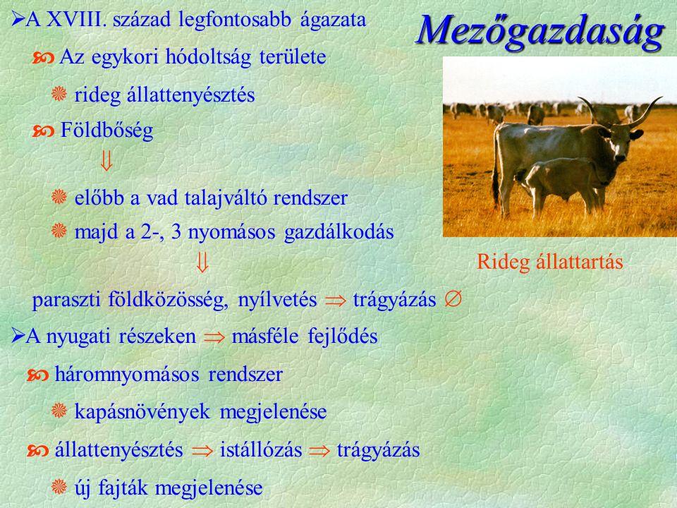Mezőgazdaság  A XVIII.
