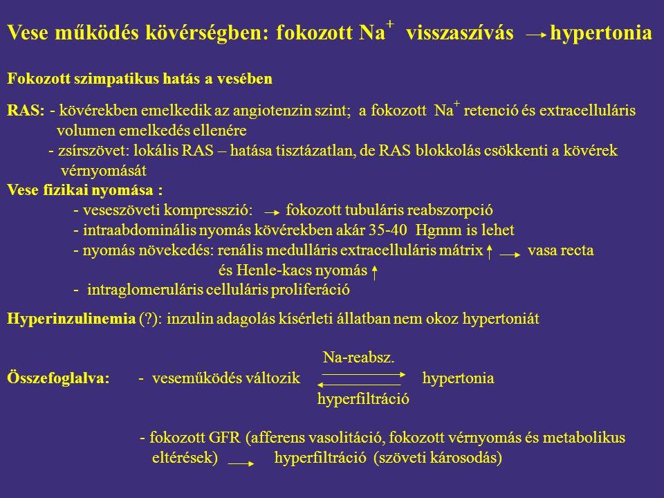 RAS: - kövérekben emelkedik az angiotenzin szint; a fokozott Na + retenció és extracelluláris volumen emelkedés ellenére - zsírszövet: lokális RAS – h
