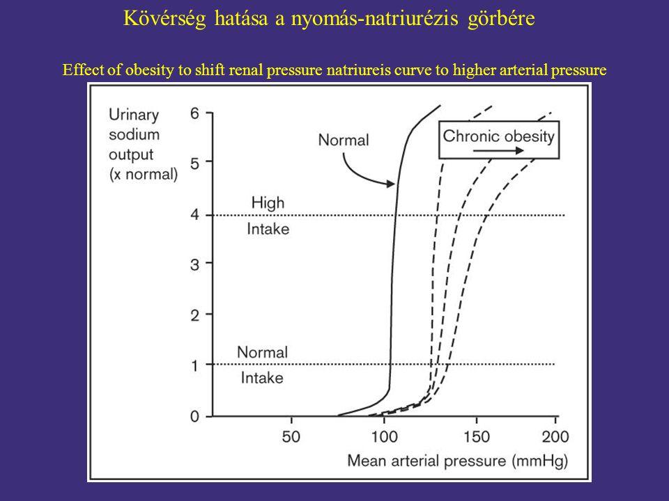 Kövérség hatása a nyomás-natriurézis görbére Effect of obesity to shift renal pressure natriureis curve to higher arterial pressure