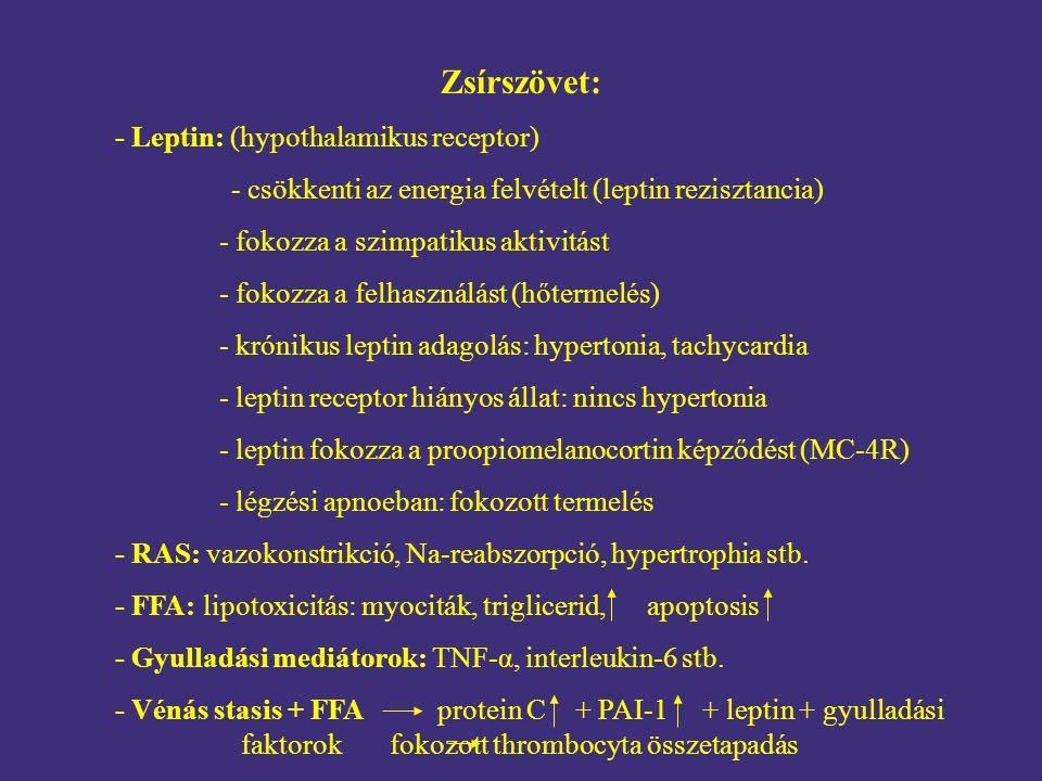 Zsírszövet: - Leptin: (hypothalamikus receptor) - csökkenti az energia felvételt (leptin rezisztancia) - fokozza a szimpatikus aktivitást - fokozza a