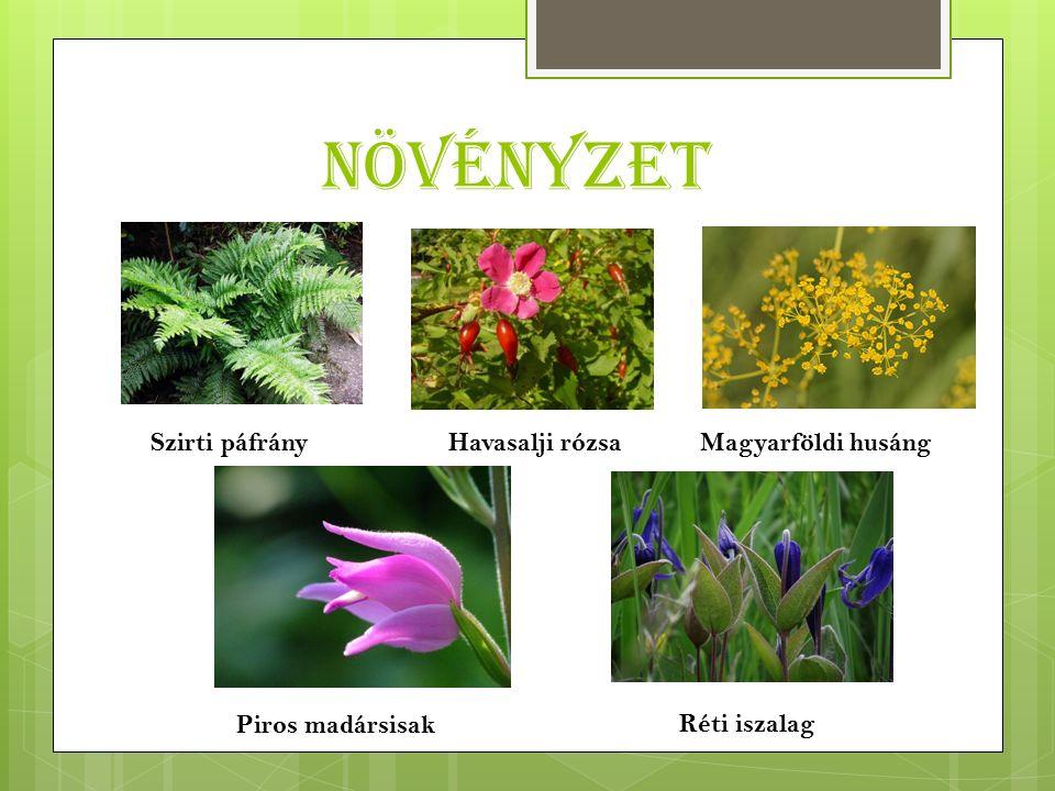 Növényzet Szirti páfrányHavasalji rózsaMagyarföldi husáng Piros madársisak Réti iszalag