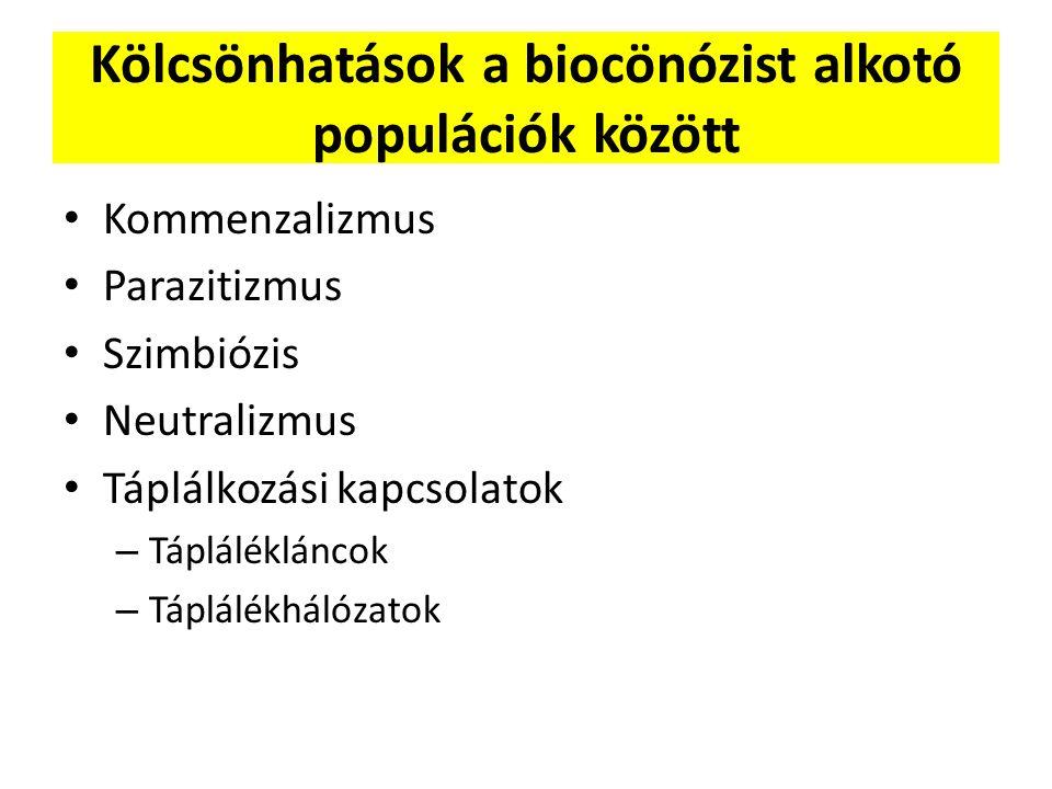 Kölcsönhatások a biocönózist alkotó populációk között Kommenzalizmus Parazitizmus Szimbiózis Neutralizmus Táplálkozási kapcsolatok – Táplálékláncok –