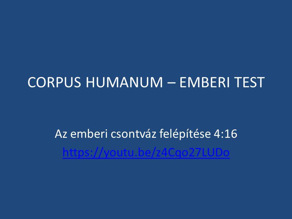 CORPUS HUMANUM – EMBERI TEST Az emberi csontváz felépítése 4:16 https://youtu.be/z4Cqo27LUDo