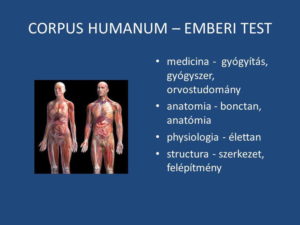 CORPUS HUMANUM – EMBERI TEST medicina - gyógyítás, gyógyszer, orvostudomány anatomia - bonctan, anatómia physiologia - élettan structura - szerkezet,