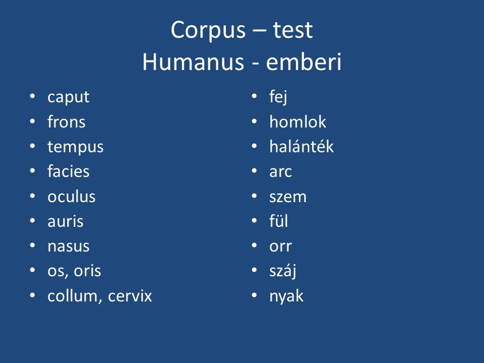 Corpus – test Humanus - emberi caput frons tempus facies oculus auris nasus os, oris collum, cervix fej homlok halánték arc szem fül orr száj nyak