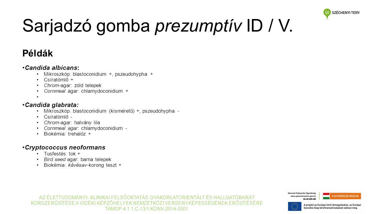 Példák Candida albicans: Mikroszkóp: blastoconidium +, pszeudohypha + Csíratömlő + Chrom-agar: zöld telepek Cornmeal agar: chlamydoconidium + Candida