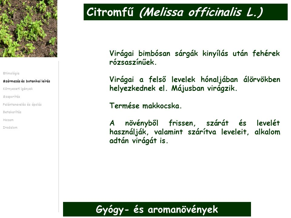 A citromfű Közép-, Kelet- és Dél-Európában található hűvös, humid klímán 0-1,000m magasság között.
