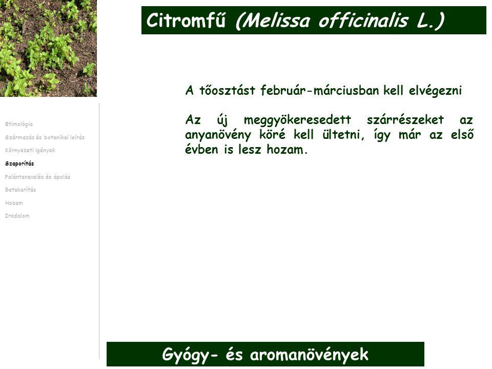 A tőosztást február-márciusban kell elvégezni Az új meggyökeresedett szárrészeket az anyanövény köré kell ültetni, így már az első évben is lesz hozam