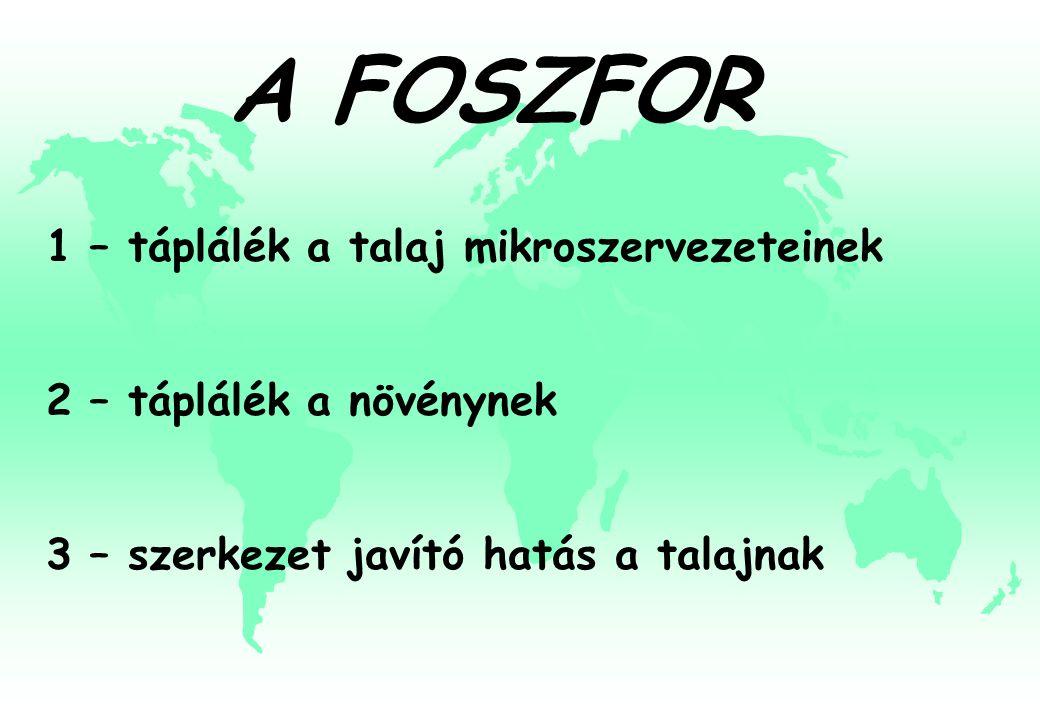 A FOSZFOR 1 – táplálék a talaj mikroszervezeteinek 2 – táplálék a növénynek 3 – szerkezet javító hatás a talajnak